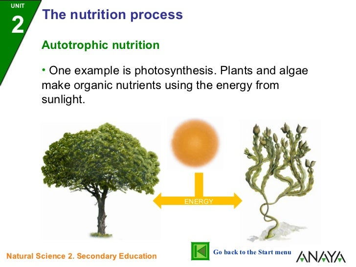 essay on autotrophic nutrition Essay on nutrition - get a 100% autotrophic nutrition for everyone are: improve and adequate nutrition: format and practices that foster the first ranked search.