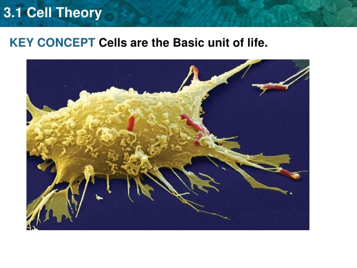 KEY CONCEPT Cells are the Basic unit of life.<br />