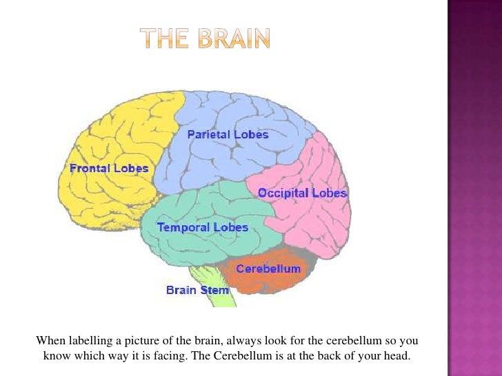 Unit 3 mind brain body revision 14 ccuart Gallery