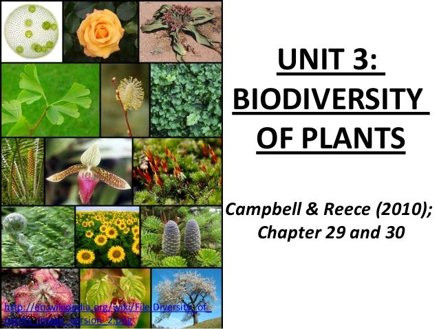 UNIT 3:BIODIVERSITYOF PLANTSCampbell & Reece (2010);Chapter 29 and 30http://en.wikipedia.org/wiki/File:Diversity_of_plants...