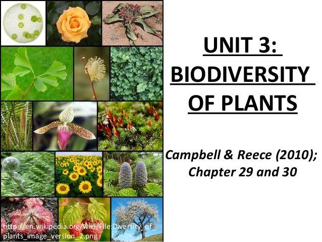 biodiversity of plants
