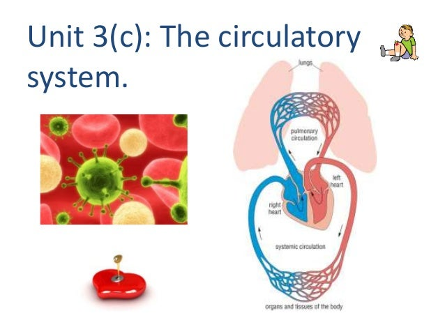 Unit 3(c): The circulatory system.