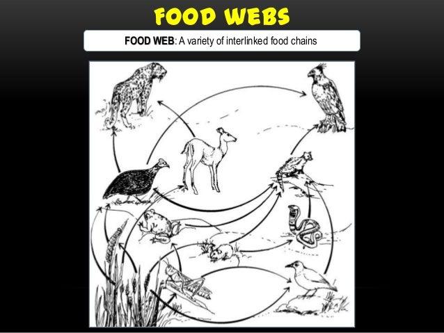 Food Chains Food Webs