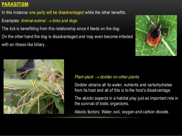 parasitic relationship in plants and animals