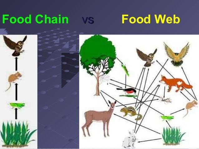 Unit 3 Lesson 1 Food Chains