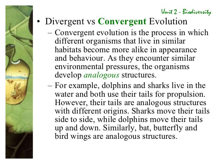 convergent evolution 3 essay Convergent evolution of organisms and australia blood groups include in your essay hormonal controls continue reading ap essay questions.