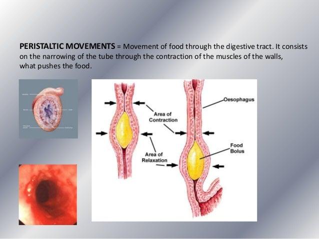 Unit3 Nutritionalprocessdigestive Illnesses