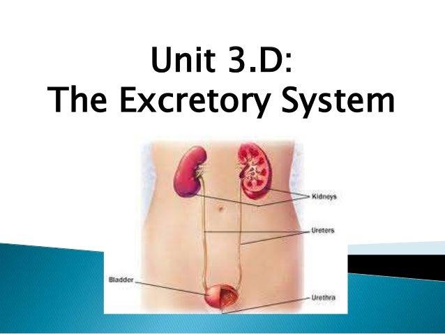 Unit 3.D: The Excretory System