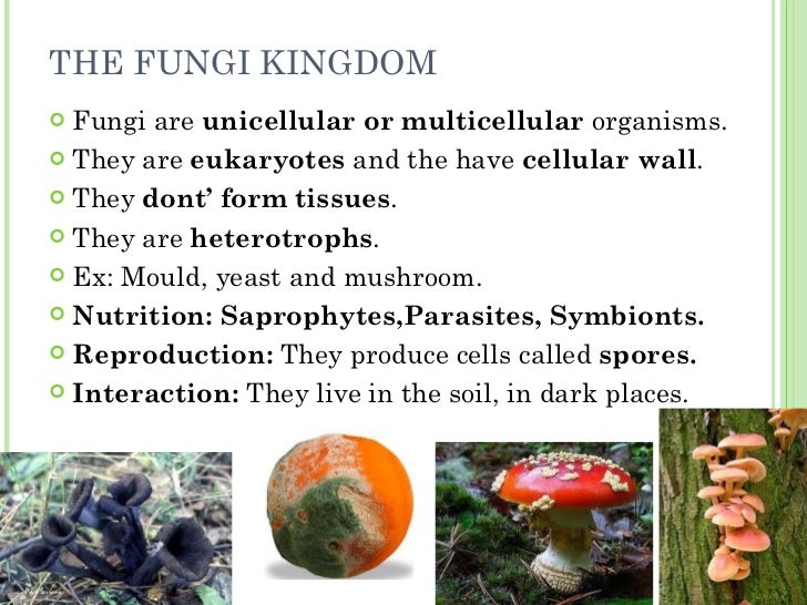 Unit 4 monera protoctist fungi and plants for Soil in sentence