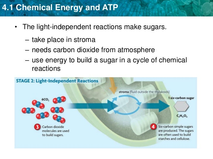 Biochemical steps chemosynthesis process
