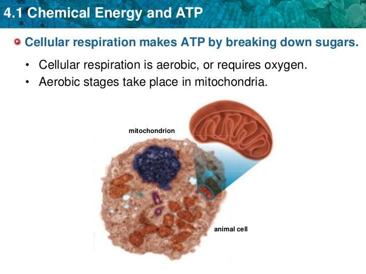 Atp Chemical Energy Worksheet For High School on Atp Chemical Energy Worksheet For High School