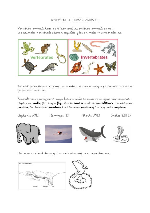 unit 4 resumen science animals