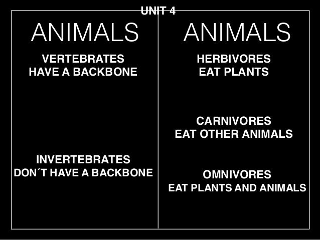ANIMALS INVERTEBRATES! DON´T HAVE A BACKBONE VERTEBRATES! HAVE A BACKBONE HERBIVORES! EAT PLANTS CARNIVORES! EAT OTHER ANI...