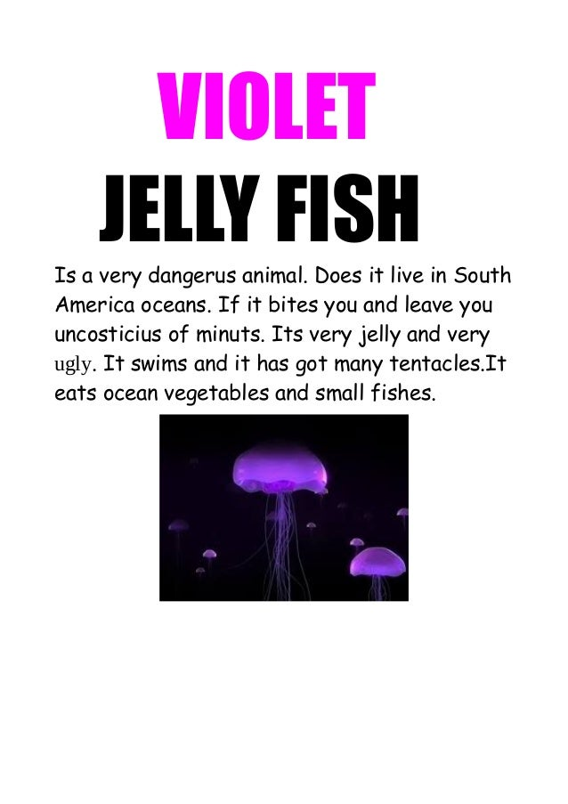 VIOLET JELLY FISH Is a very dangerus animal. Does it live in South America oceans. If it bites you and leave you uncostici...