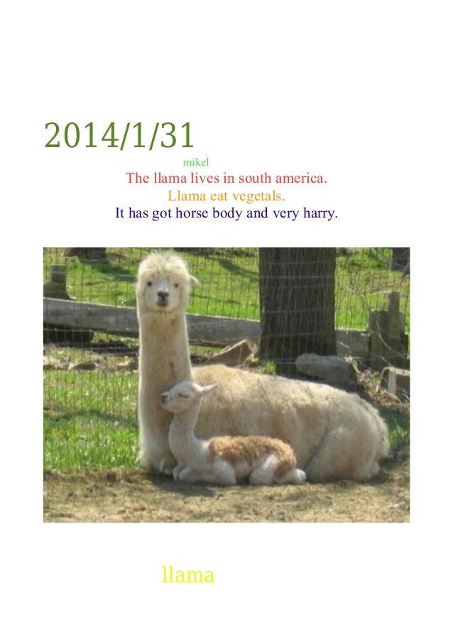 2014/1/31 mikel  The llama lives in south america. Llama eat vegetals. It has got horse body and very harry.  llama
