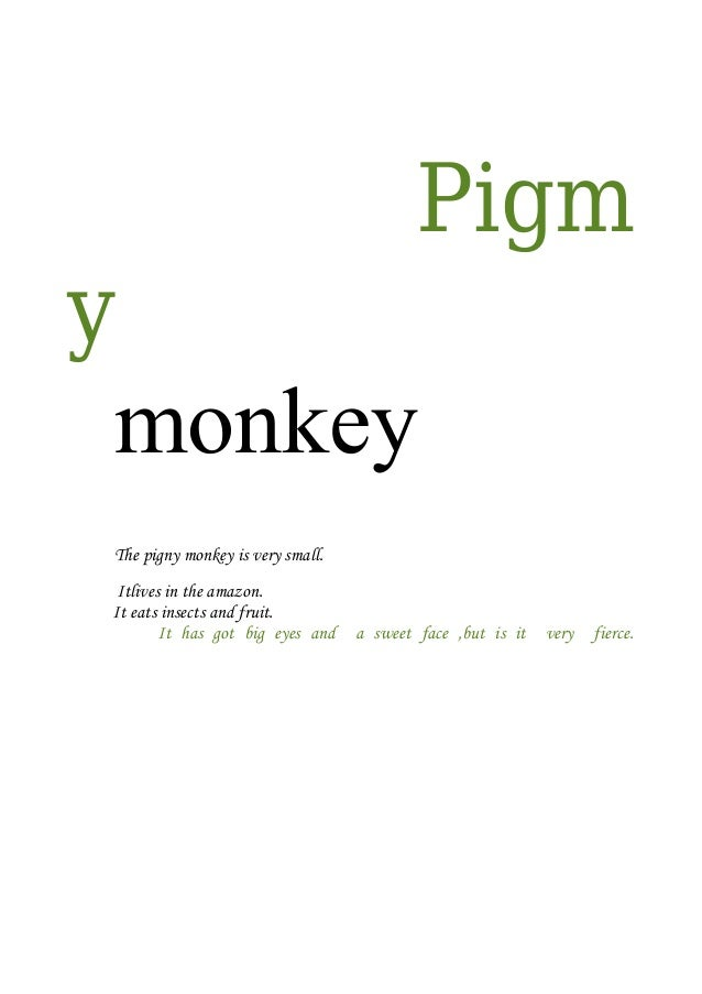 Pigm y monkey The pigny monkey is very small. Itlives in the amazon. It eats insects and fruit. It has got big eyes and  a...