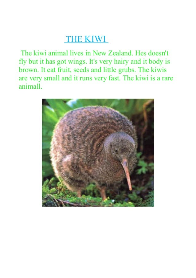 THE KIWI The kiwi animal lives in New Zealand. Hes doesn't fly but it has got wings. It's very hairy and it body is brown....