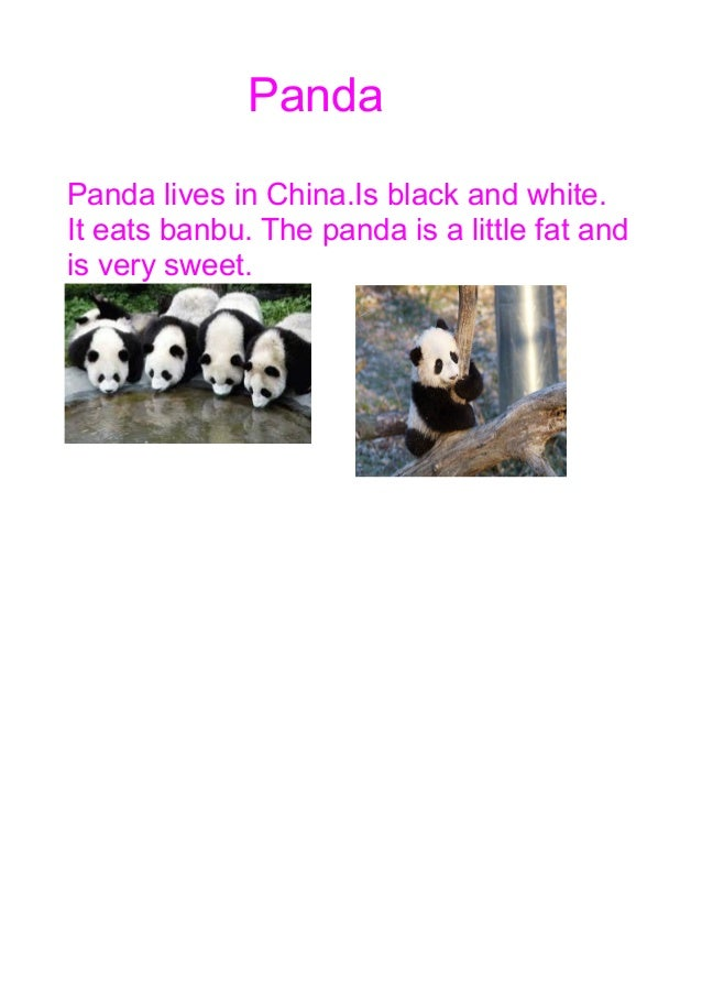 Panda Panda lives in China.Is black and white. It eats banbu. The panda is a little fat and is very sweet.
