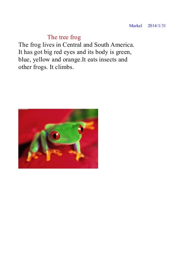 Markel  The tree frog The frog lives in Central and South America. It has got big red eyes and its body is green, blue, ye...