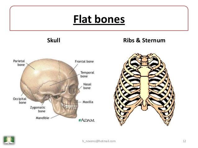 Unit 4 Skeletal System
