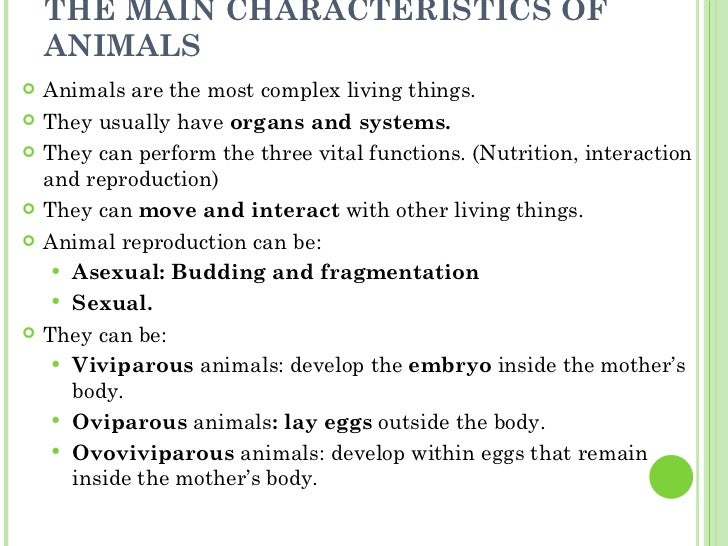 invertebrate worksheets