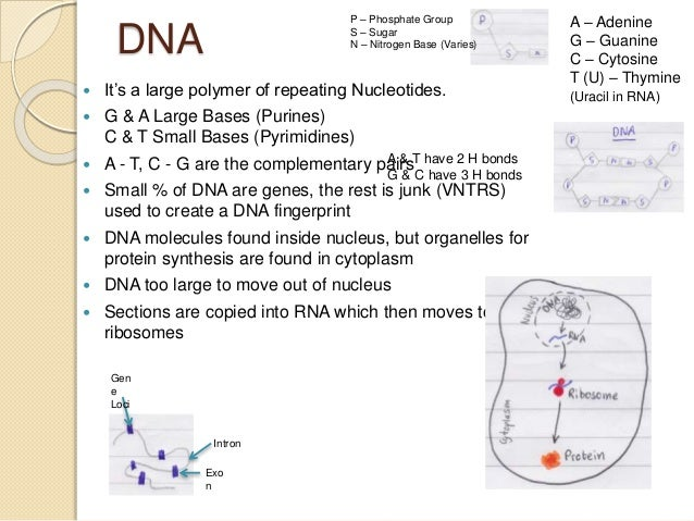 unit 5 biology This test is on the stuff we learned in unit five with cell division and the  components of it plus the cell life.