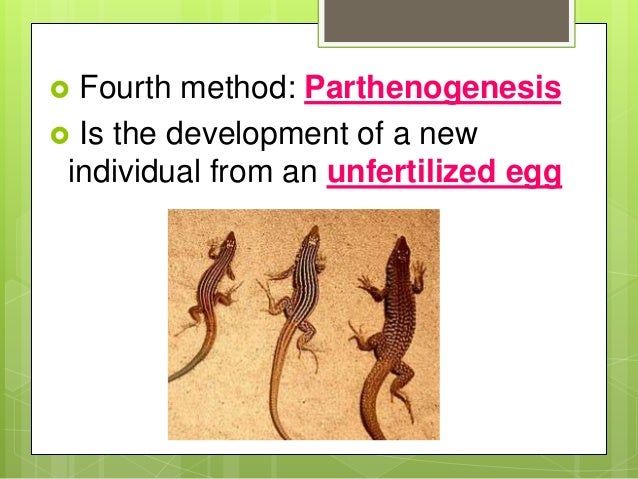 reproduction and introduction parthenogenesis The persistence of facultative parthenogenesis in facultative parthenogenesis in consistent with models of geographical parthenogenesis introduction.