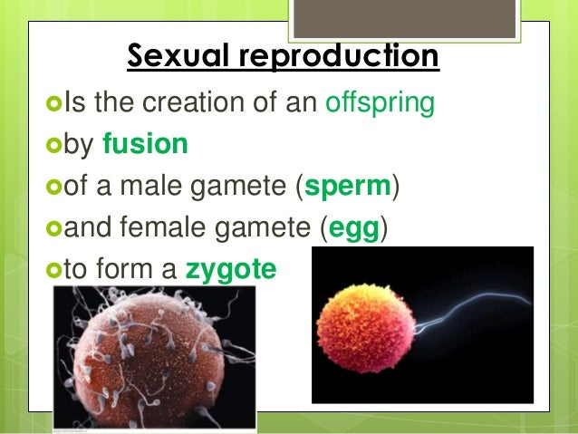 an investigation of reproduction and development in animals The video explains about animal reproduction it explains about characteristics of mammals to show how mammals are different from egg laying animals like birds, reptiles etc.