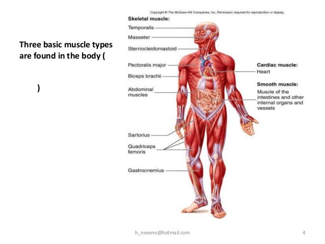 unit 5 muscular system, Muscles