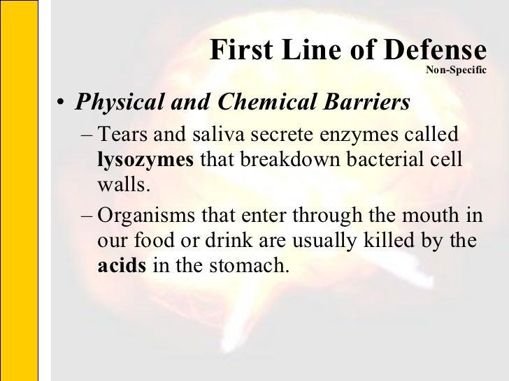 First Line of Defense <ul><li>Physical and Chemical Barriers </li></ul><ul><ul><li>Tears and saliva secrete enzymes called...