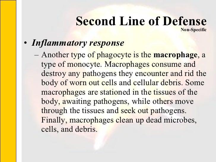 Second Line of Defense <ul><li>Inflammatory response </li></ul><ul><ul><li>Another type of phagocyte is the  macrophage , ...
