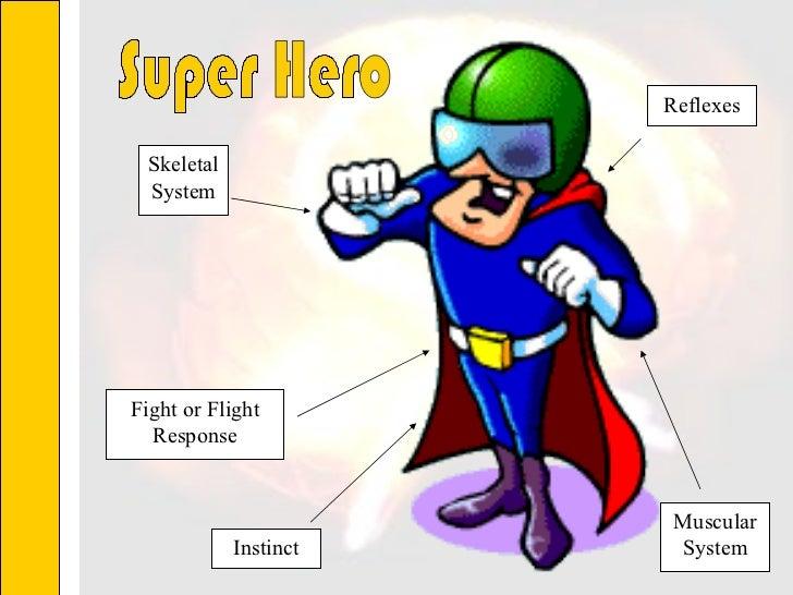 Skeletal System Fight or Flight Response Instinct Muscular System Reflexes Super Hero
