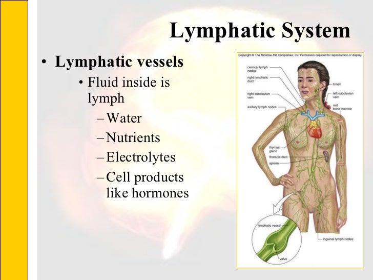Lymphatic System  <ul><li>Lymphatic vessels </li></ul><ul><ul><ul><li>Fluid inside is lymph </li></ul></ul></ul><ul><ul><u...