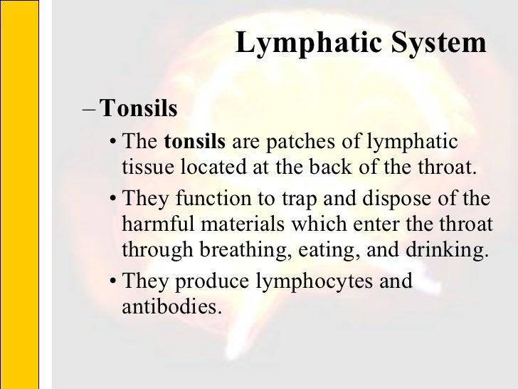 Lymphatic System  <ul><ul><li>Tonsils </li></ul></ul><ul><ul><ul><li>The  tonsils  are patches of lymphatic tissue located...