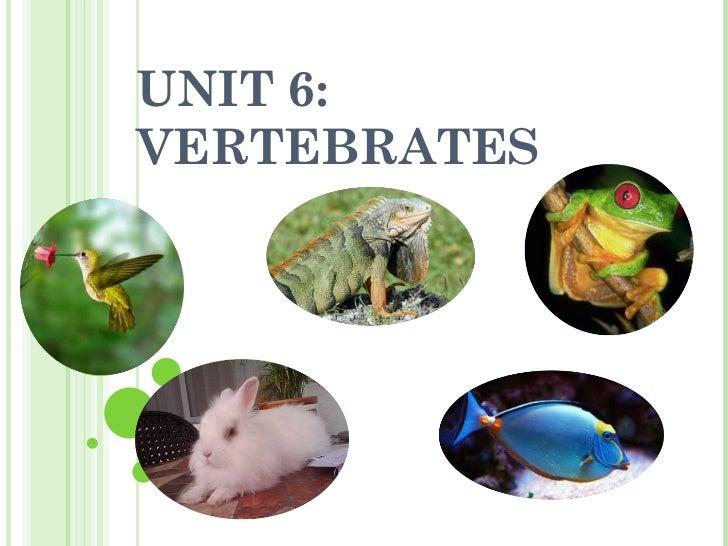 UNIT 6: VERTEBRATES