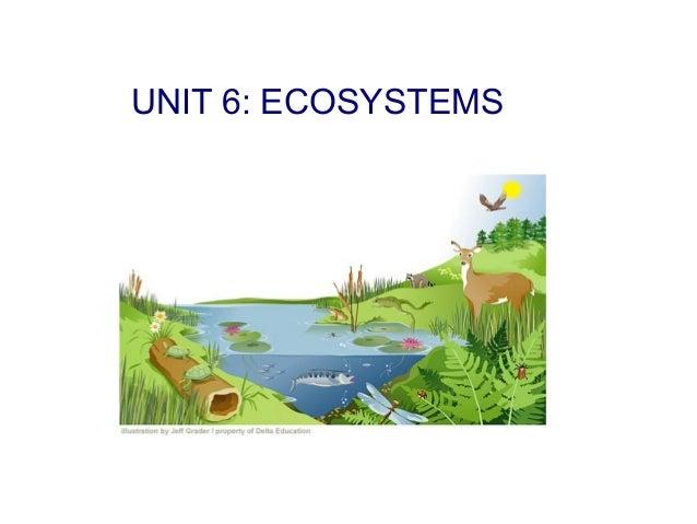 UNIT 6: ECOSYSTEMS