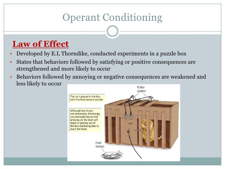 thorndikes law of effect operant conditioning essay The edward thorndike theory is a learning theory that focuses on operant conditioning within behaviors by studying animals, and usually just cats, he devised.