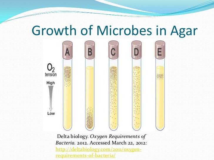 bacteria growth requirements Chapter 4 dynamics of prokaryotic growth overview this chapter describes how bacteria are cultivated in the laboratory bacterial growth is defined and.