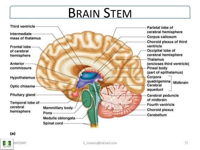 Unit 6 Nervous System