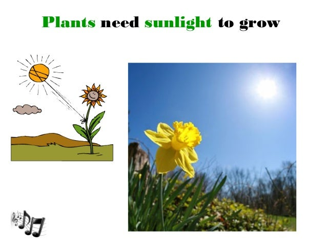 Plants That Do Not Need Much Sunlight Unit 7 Plants