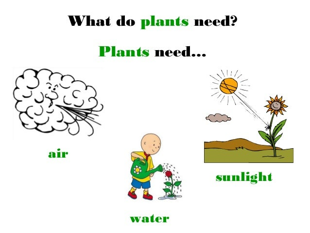 Plants that Grow without Sunlight | 17 Best Plants to Grow ...
