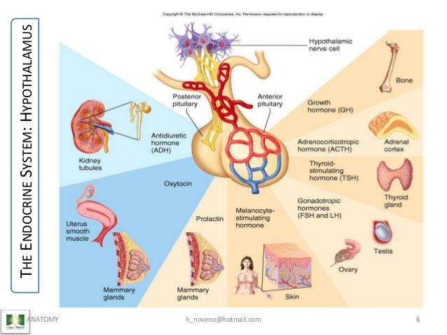 Unit 8 Endocrine System