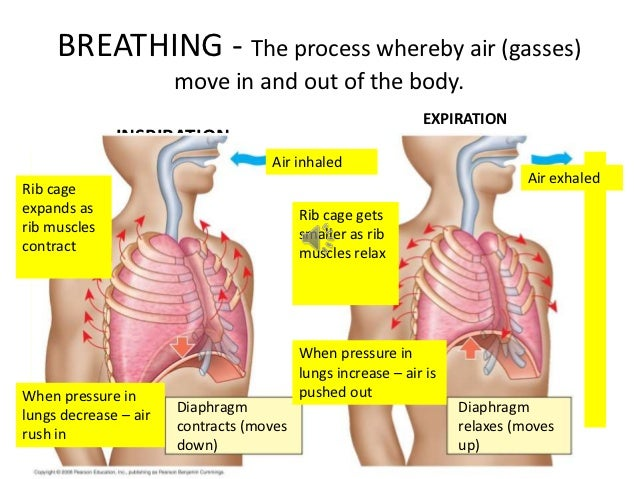 Respiratory system and gaseous exchange