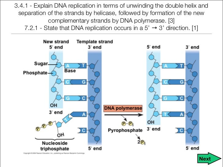 """dna notes for grade 9 Dna and protein synthesis - """"life is a three letter word"""" - chapter notes raycroft notes - dna & protein synthesis - student 2000 page 1."""