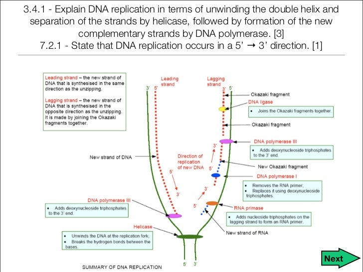 dna rna notes Genetics summary of class notes table of contents dna dna replication rna dna transcription proteins the codon translation: protein synthesis gene mutation.
