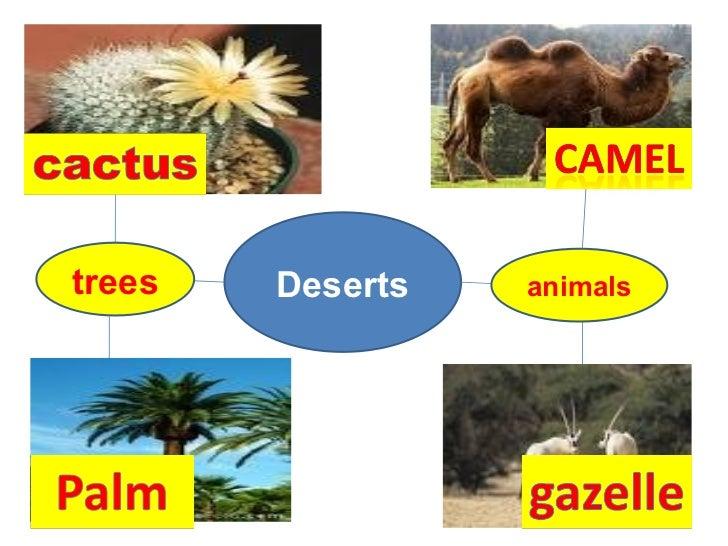 Deserts trees animals