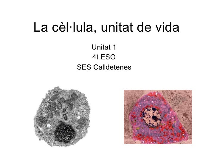 La cèl·lula, unitat de vida Unitat 1 4t ESO SES Calldetenes