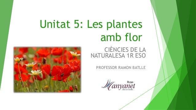 Unitat 5 les plantes amb flor for Les plantes