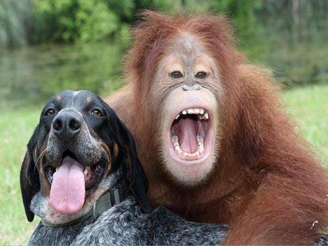 komunikasyon ng hayop Ang komunikasyon ng hayop ay kahit anong asal ng isang bahagi ng isang  hayop na may epekto sa kasalukuyan o hinaharap na asal ng isa pang hayop.