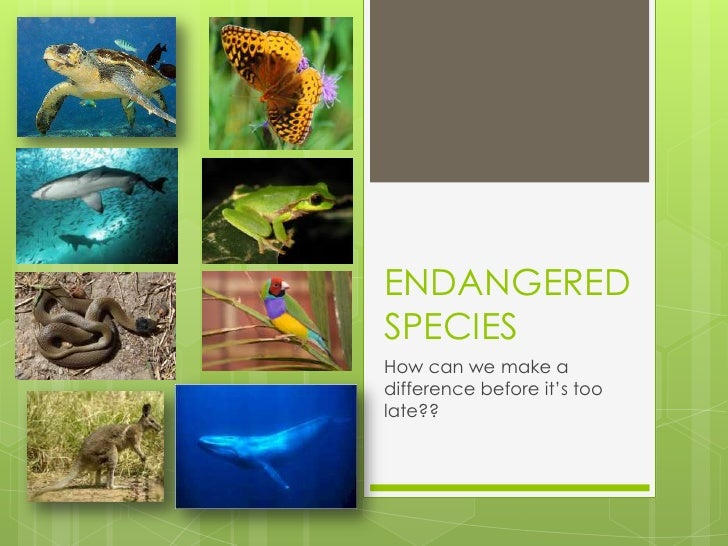 ENDANGERED SPECIES<br />How can we make a difference before it's too late??<br />